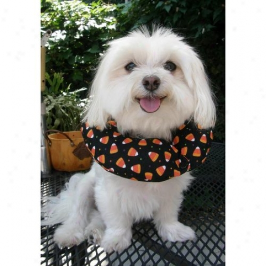 Puppy Bumpers Candyc1316 Candy Corn Puppy Bumper 13 To 16in