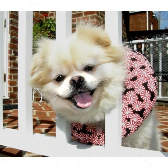 Puppy Bumpers Pprmnt1316 Peppermint Puppy Bumper 13 To 16in