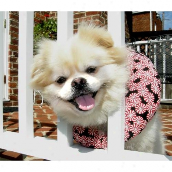 Puppy Bumpers Pprmnt710 Peppermint Puppy Bumper Up To 10in