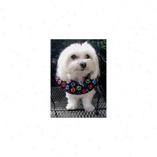 Puppu Bumpers Rbp1316 Rainbow Paws Collar 13 Inch - 16 Inch