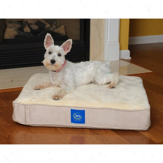 Serta Pet Beds True Response Memory Foam Dog Bed In Cream