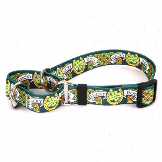 Yellow Dog Design Lucky Dog Martingale Collar