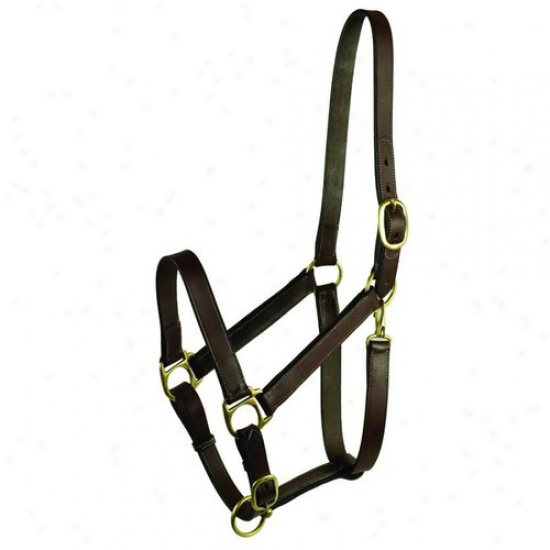 Gatsby Leather 203-1 Fixed Halter
