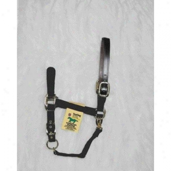 Hamilton Halter 1dalsd Smbk Adjustable Halter With Leather Headpole