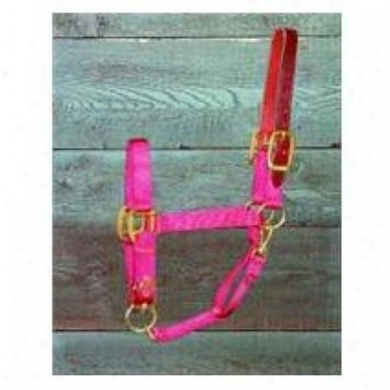 Hamilton Halter 1dalss Smrd Small Adjustable Halter With Leather Headpole, Red