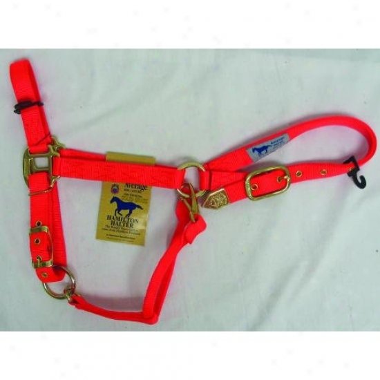 Hamilton Halter 1das Avor Adjustable Chin Halter With Snap