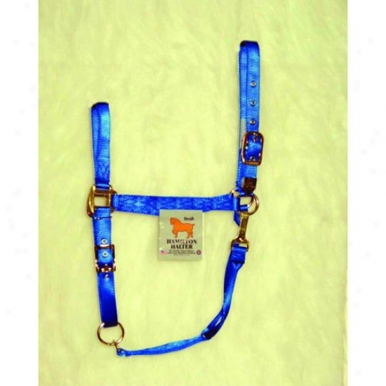 Hamilton Halter 1das Drbl Adjustable Cjin Halter With Snap