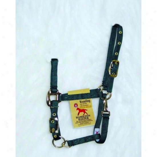 Hamilton Halter 3das Wndg Adjustable Chin Halter With Snap