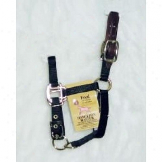 Hamilton Halter 3dla Flbk Adjustable Halter With Leather Headpole