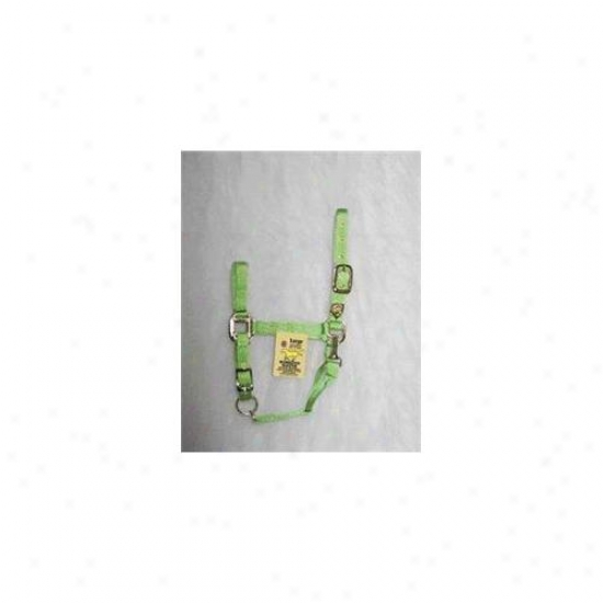 Hamilton Halter Company - Adjustable Chin Halter With Snap- Lime Large - 1das Lgli