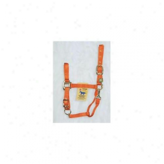 Hamilton Halter Company - Adjustable Chin Halter With Snap- Mango Average - 1das Avna