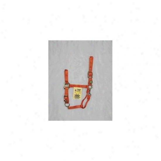 Hamilton Halter Corporation - Adjustable Chin Halter With Snap- Mango Large - 1dax Lgma