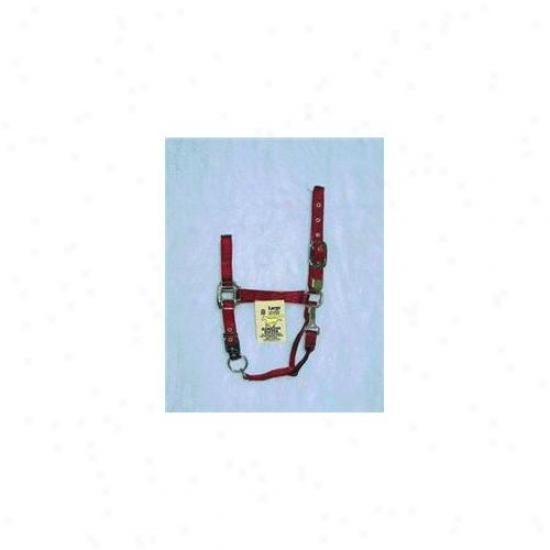 Hamilton Halter Company - Adjustable Chin Halter With Snap- Red Large - 1das Lgrd