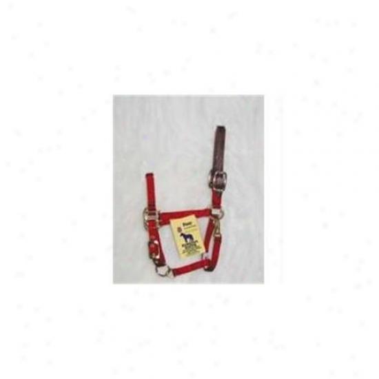Hamilton Halter Company - Adjustable Halter With Leather Headpole- Red Pony - 3dlas Pord