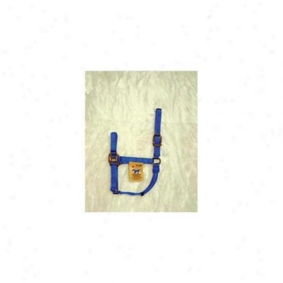 Hamilton Halter Company - Quality Halter- Blue Average - 1q Avbl