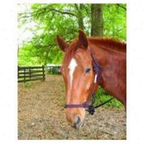 Hamilton Halter Rhl Av Bkwn Adult Cavalry Rope Halter With Lead, Black/wkne