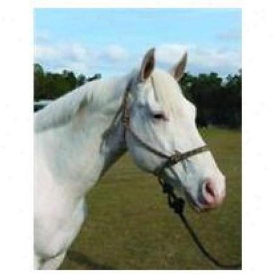 Hamilton Halter Rhl Av Brtn Adult Horse Rope Halter With Lead, Brown/tan