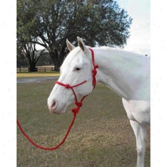 Hamilton Halter Rhl Avrd Rope Halter With Lead Adult Horse