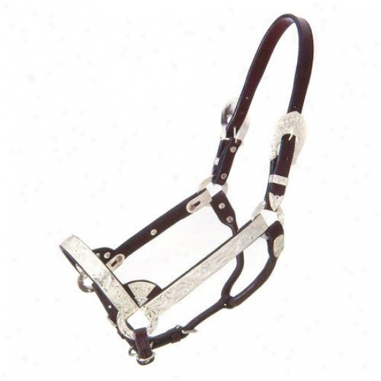 Royal Sovereign Dadk Oil Silver Show Halter