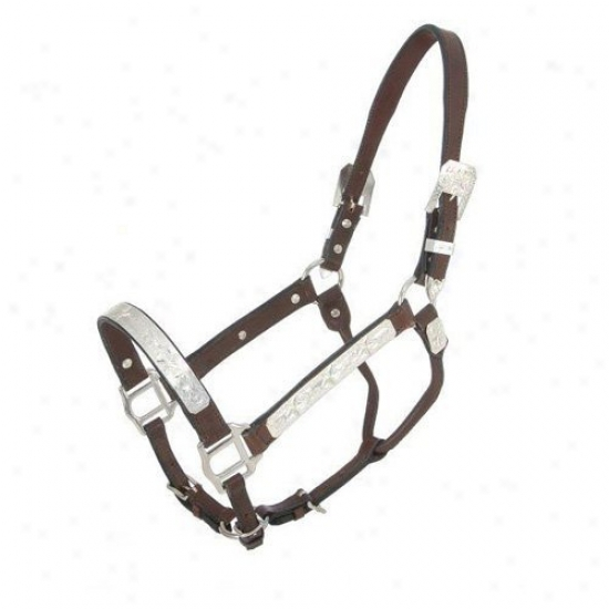 Royal Sovereign Raised Star Show Halter