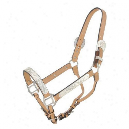 Royal King Yearling Silver Bar Show Halter