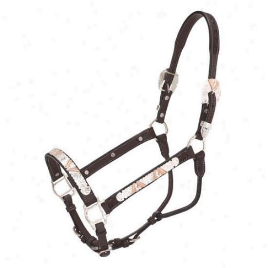 Silver Fox Annual rate  Greek  Silver And Copper V Show Halter
