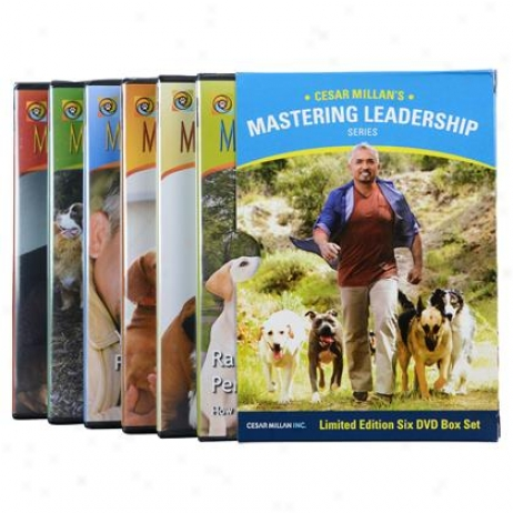 Cesar Millan 6 Dvd Box Set