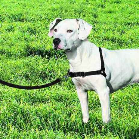 "Easy Walk Harness And Lash (mediuum-girth Adjusts 20-26"", 6' Leash 3/4"" Remote, Black/silver Color)"