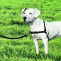 "Easy Walk Harness And Tie (medium-girth Adjusts 20-26"", 6' Leash 3/4"" Wide, Black/silver Color)"