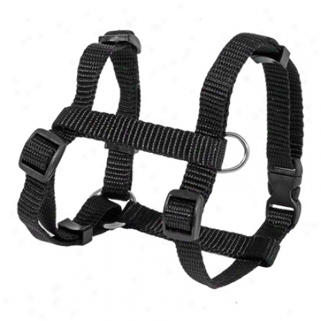 Westminster Harness