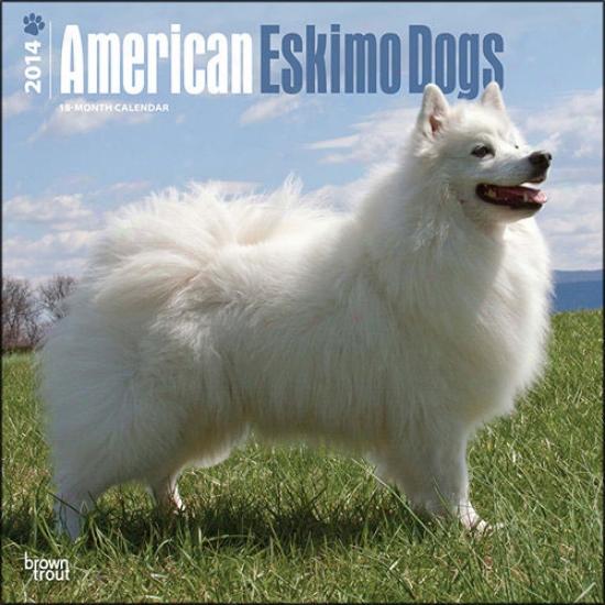 American Eskimo Dog 2014 Calendar