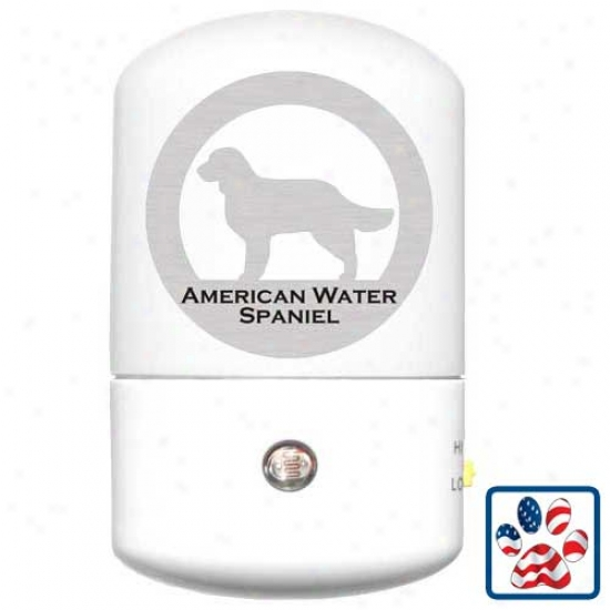 American Water Spaniel Led Night Light