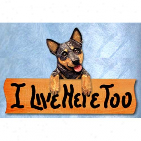 Australian Cattle Dog I Live Here Too Maple Finish Sign Blue Merle