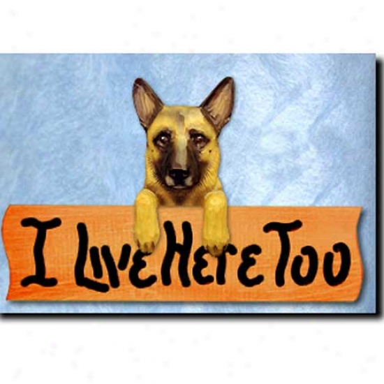Belgian Malinois I Live Here Too Maple Finish Sign