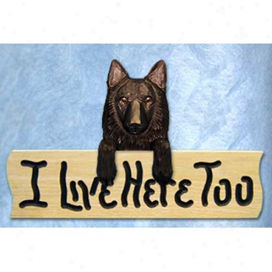 Belgian Sheepdog I Live Hither Too Oak Finish Cognizance