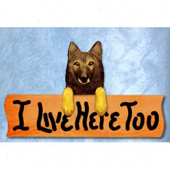 Belgian Tervuren I Live Here Too Maple Finish Sign