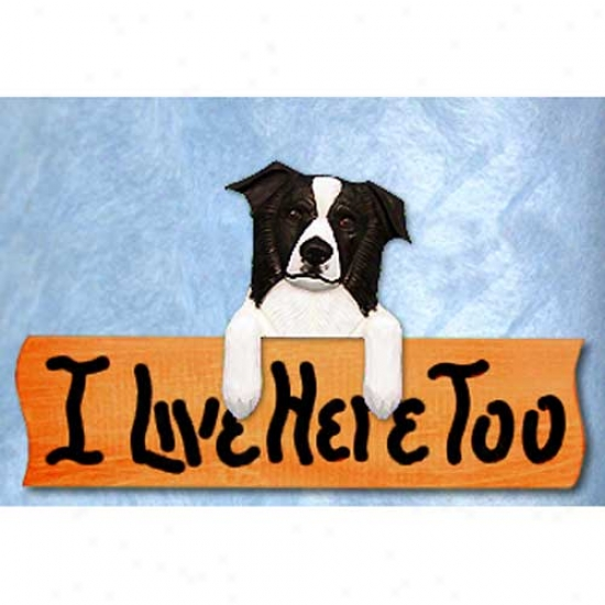 Border Collie I Live Here Too Maple Finish Sign Black