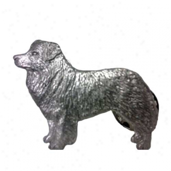 Border Collie Pewter Straw