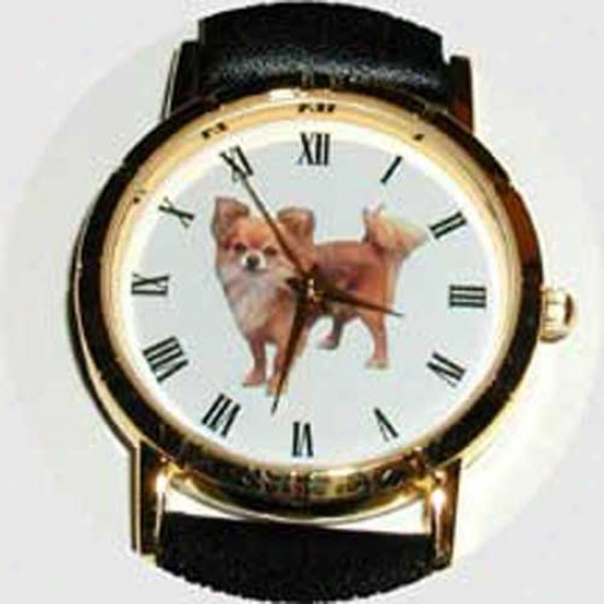 hCihuahua (long Hair) Watch - Small Face, Black Leather