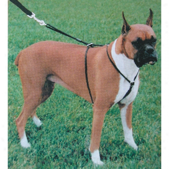 "Control Harness / Large (28""-36"") - Holt"