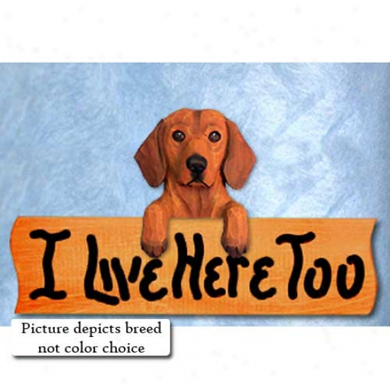 Dachshund I Live Here Too Maple Finish Sign Wirehair Black And Tan