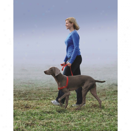 Gentle Leader Easy Walk Harness (x-large) Blue
