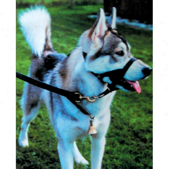 Head Collar 4 Large (90-150-lbs) - Halti