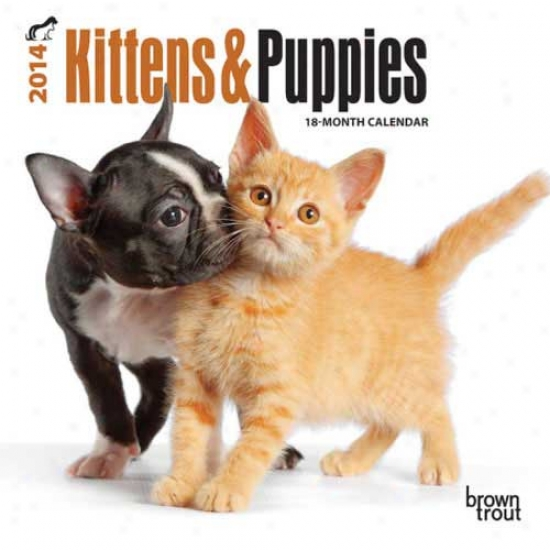 Kittens And Puppies 2014 Mini Calendar