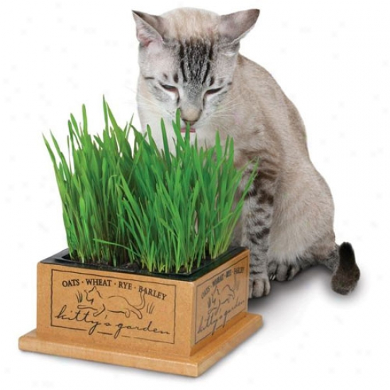 Kittys Garden Edible Cat Grwss Planter