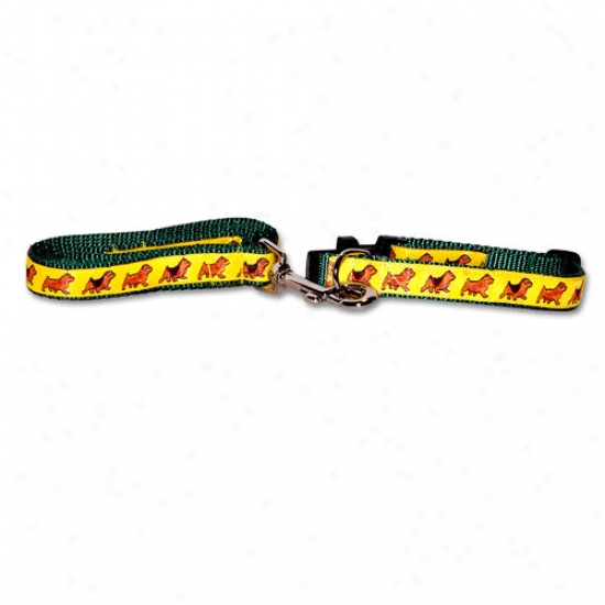 Norfolk And Norwich Terrier - Green Collar And Lead Set