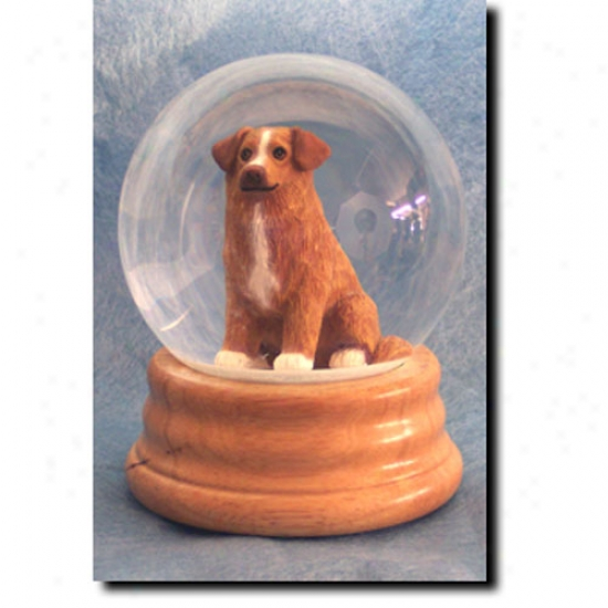 Nova Scotia Duck Tolling Retrievver Musical Snow Globe