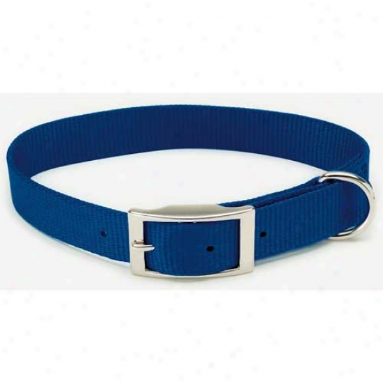 Nylon Collar 3 Quarters Inch By 20inches Blue