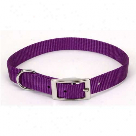 Nylon Collar 5 Eighths Inch By 12inches Purple