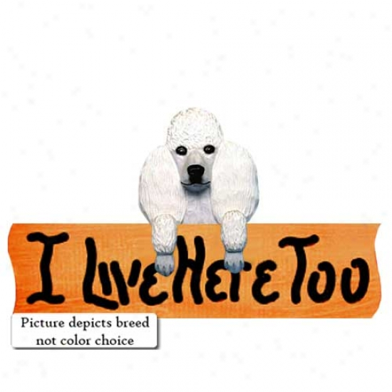 Poodle I Live Here Too Maple Finish Sign Red